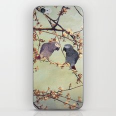 African grey parrots iPhone & iPod Skin