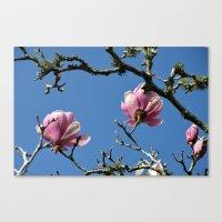 Saucer Magnolias II Canvas Print
