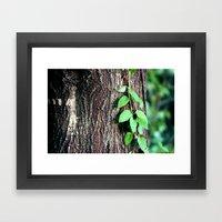 Wrinkles In Nature Framed Art Print