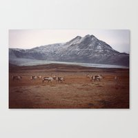 Roaming Canvas Print