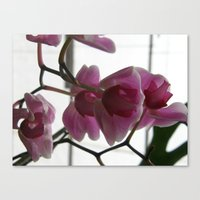 Orchids #1 Canvas Print