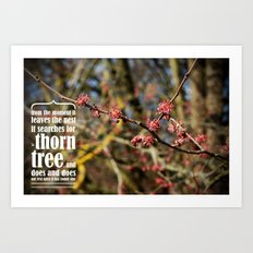 the thorn birds Art Print