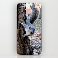 Washington Square Squirr… iPhone & iPod Skin