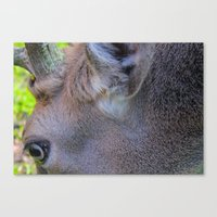 Stag Eye Canvas Print
