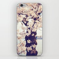 Cherry Tree in bloom iPhone & iPod Skin