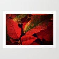 Christmas Plant Art Print