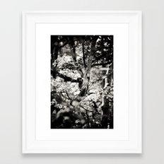 silver spring monkey Framed Art Print