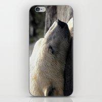 A polar bears' sweet dreams iPhone & iPod Skin