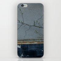 window iPhone & iPod Skin