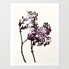 sugar maple 1 Art Print
