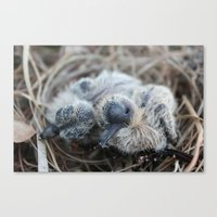 Birds. Canvas Print
