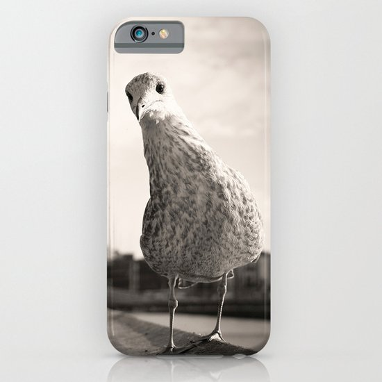 Inquisitive seagull iPhone & iPod Case