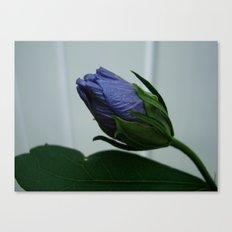 Blue Bud Canvas Print