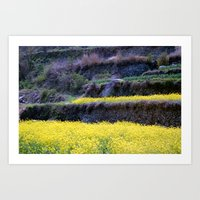 Rape Flowers 2 Art Print