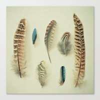 The Feather Collection Canvas Print