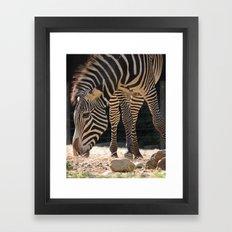 Grevy's Zebra Framed Art Print