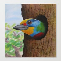 Beautiful Bird Canvas Print