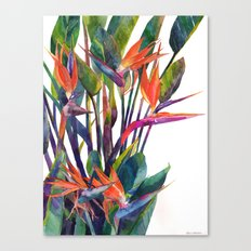 The bird of paradise Canvas Print