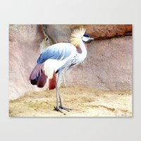 African Crowned Crane at Sunrise Canvas Print