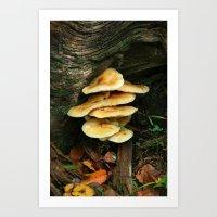 Lichen - Fungi Art Print