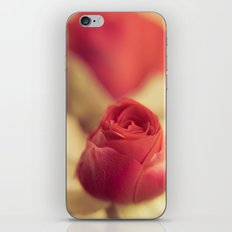 A red rose for your sweetheart ... iPhone & iPod Skin