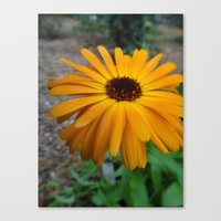 Orange Flower Side Canvas Print