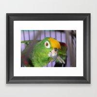 Polly Want A Cracker? Framed Art Print