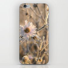 frozen delicacy iPhone & iPod Skin
