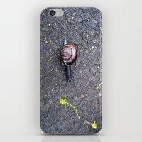 Un Caracol iPhone & iPod Skin
