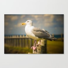 Seagull on a Fence Canvas Print