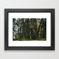Rainforest Moss Framed Art Print