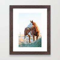 Pferd Framed Art Print