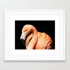 Flamingo II Framed Art Print