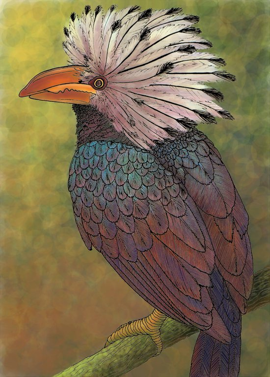 White Crested Hornbill Canvas Print