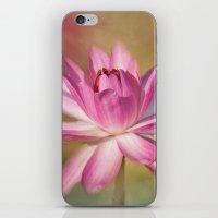Blushing Pink iPhone & iPod Skin