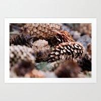 Depth Of Field Pine Cones Art Print
