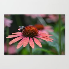 What's the Buzz? Canvas Print