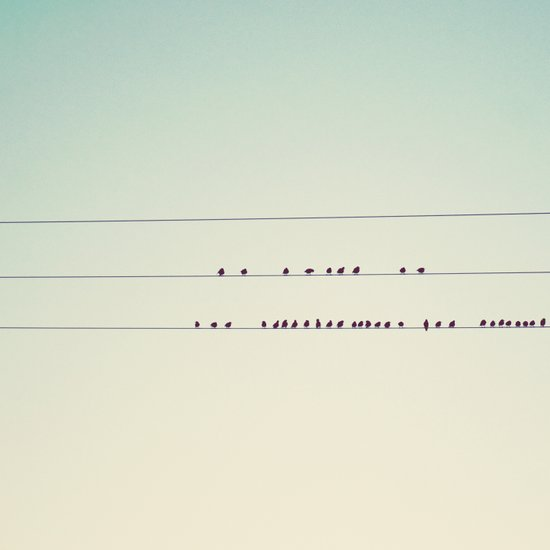 thirty-seven little birds sitting in a row ... Art Print