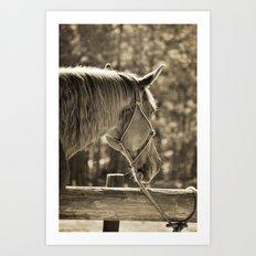 Sunlit (Horse #3) Art Print