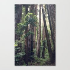 The Redwoods at Muir Woods Canvas Print