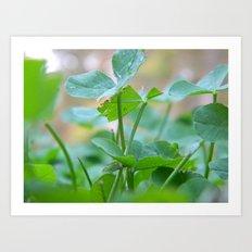 Three Leaf Clover. Art Print