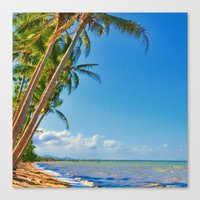 Coconut palms in Tropical North Queensland Canvas Print