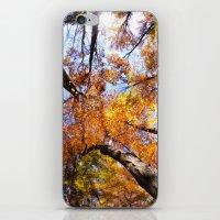 Autumn Sky iPhone & iPod Skin