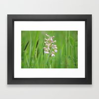 Wild orchid - untouched photography Framed Art Print