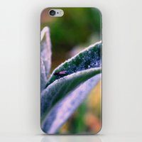 Fly On Stachys Leaf Phot… iPhone & iPod Skin