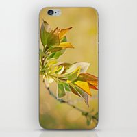 Spring Time iPhone & iPod Skin