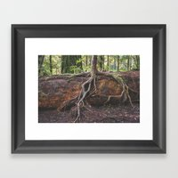 Jedediah Smith State Park - Forest Tree Framed Art Print