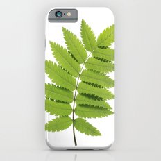 Green Rowan Leaf  Slim Case iPhone 6s