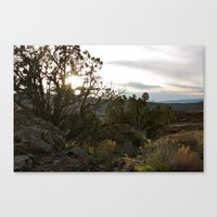 Juniper Sun Canvas Print