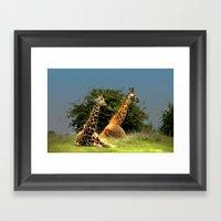 Giraffes Framed Art Print